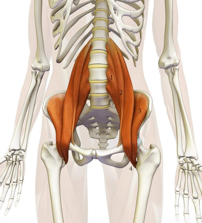 Músculo Psoas